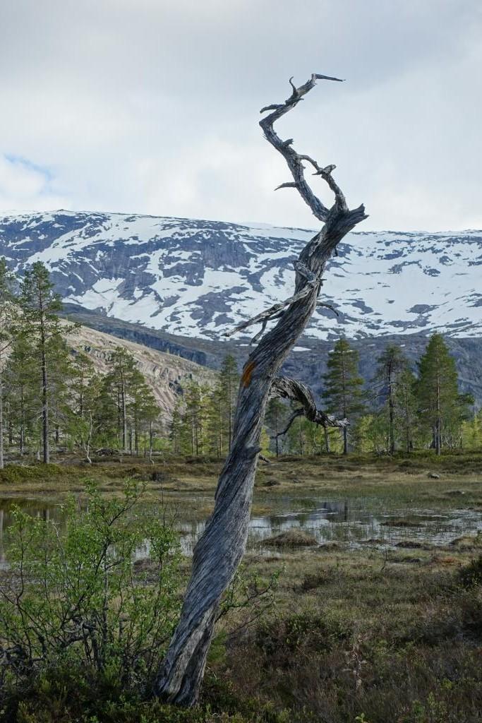 Karge Berglandschaft im Rago Nationalpark.